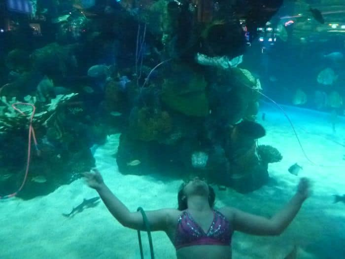 Mermaid at the Silverton Aquarium