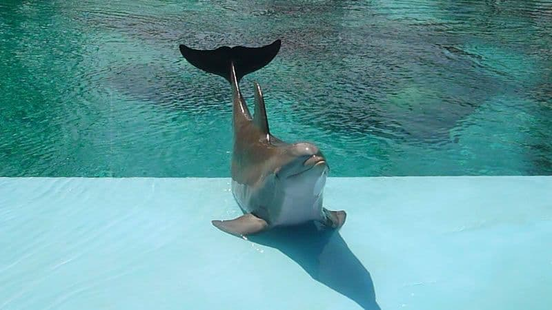 Dolphin Las Vegas
