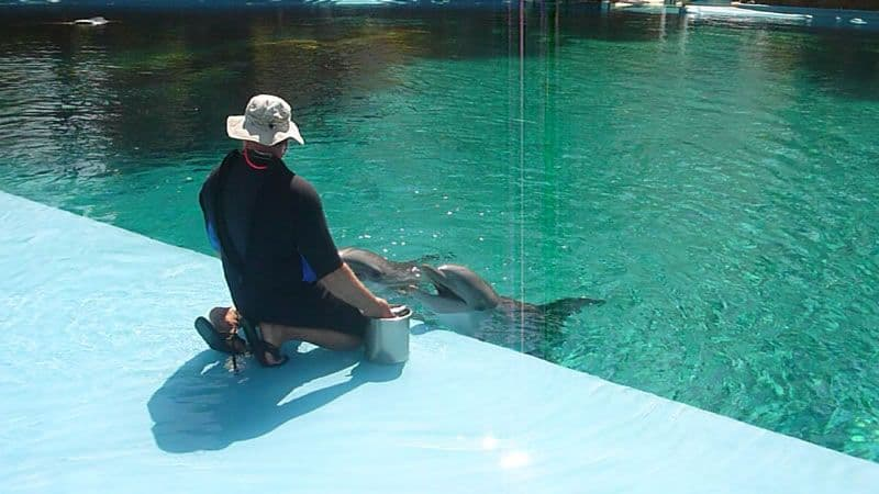 Dolphin Habitat with Trainer