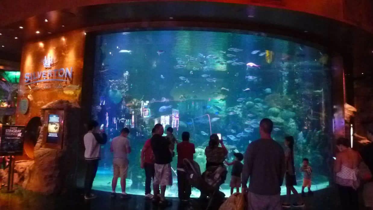 Mermaids at the Silverton Las Vegas