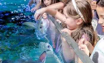 SeaQuest Interactive Petting Zoo Up to 40% Off