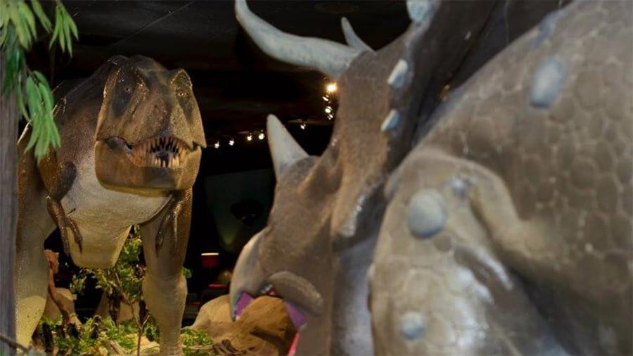 Prehistoric Life Gallery