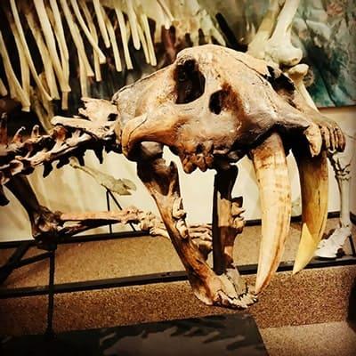Prehistoric Mammals Gallery