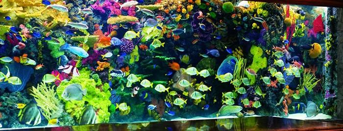Coral Reef Aquarium at the Mirage