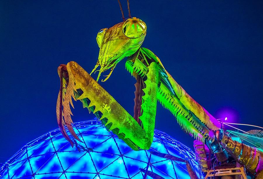 Mantis Fire Show