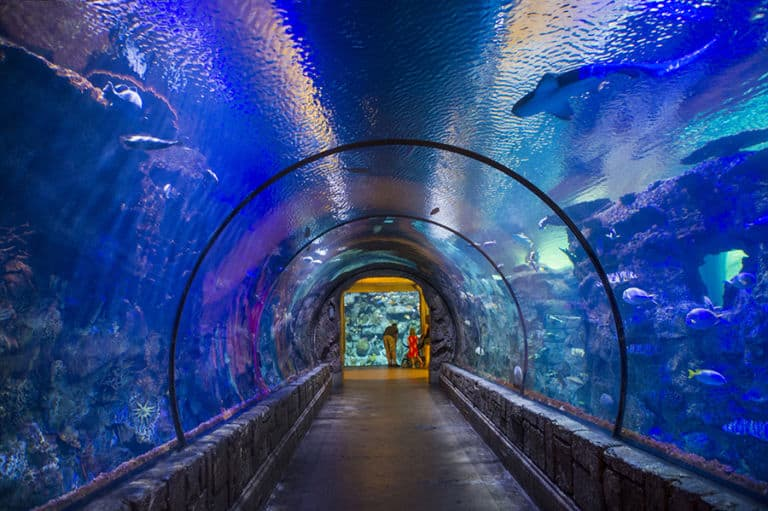 Aquariums in Las Vegas A Complete Guide