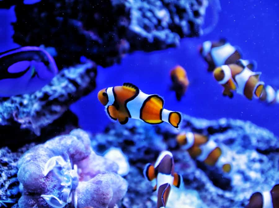 Make a Day of Visiting Las Vegas Aquariums