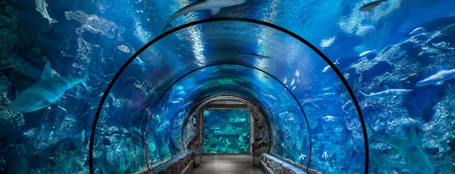 Shark Reef Aquarium at Las Vegas